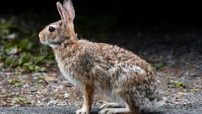 'My heart dropped': Florida woman rescues rabbit with dart in face